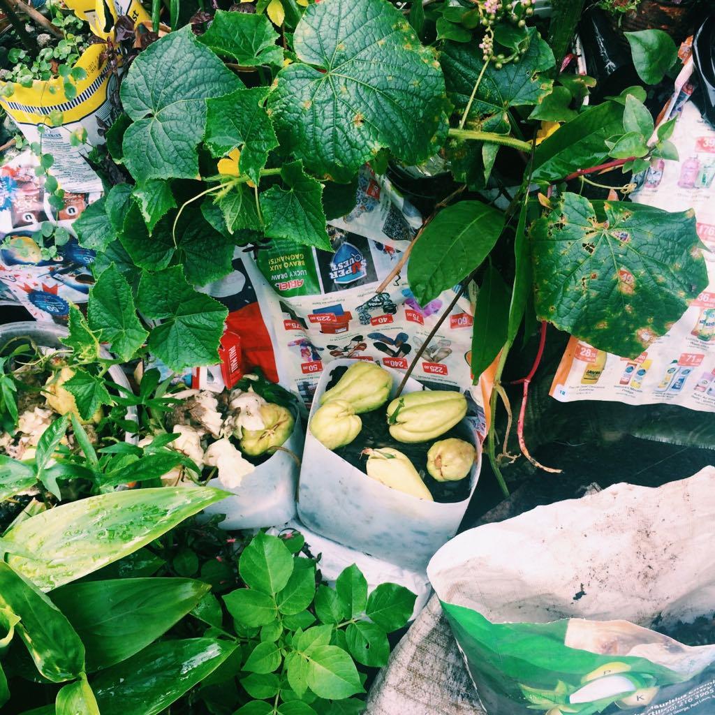 Ile Maurice village bus trip stand legumes plantes